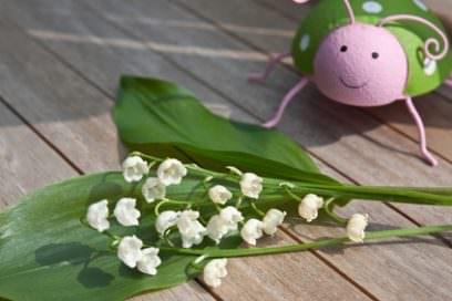 Frühling mit Familie in Sicht – Der Mai beginnt!